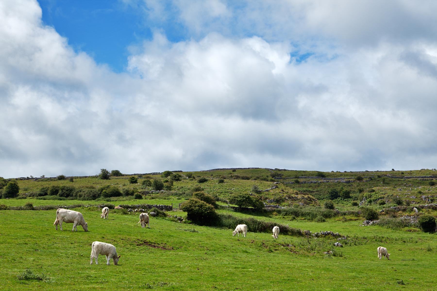 Rural Decline in Ireland